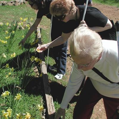 Seniors from community gardening Society for the Blind